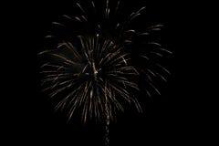 Fuochi d'artificio gialli Immagini Stock