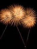 Fuochi d'artificio isolati reali, modello sbocciante dei girasoli immagini stock