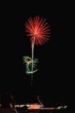 Fuochi d'artificio reali, modello di fiori con la persona e riflessione sulla priorità alta Immagine Stock