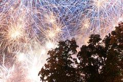 Fuochi d'artificio sopra gli alberi Fotografia Stock