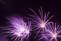 Fuochi d'artificio viola Immagini Stock