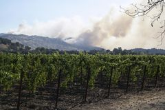 Fuochi di Napa Valley fotografia stock