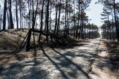 Fuochi nel Portogallo Fotografia Stock