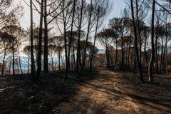 Fuochi nel Portogallo, fuoco di Alcabideque Immagini Stock