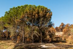 Fuochi nel Portogallo, fuoco di Alcabideque Fotografia Stock