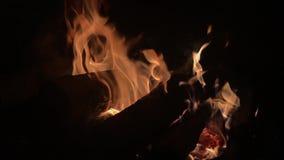 Fuoco bruciante/fuoco di accampamento di notte di estate del fuoco del campo del fuoco di accampamento archivi video