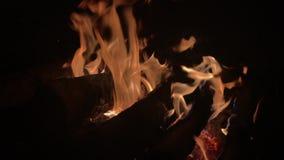 Fuoco bruciante/fuoco di accampamento di notte di estate del fuoco del campo del fuoco di accampamento video d archivio
