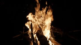 Fuoco bruciante luminoso nella foresta archivi video