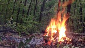 Fuoco bruciante nella foresta stock footage