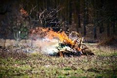 Fuoco che ha bruciato il bastone e lascia il fondo Immagine Stock