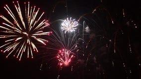 Fuoco d'artificio variopinto del buon anno nel cielo nero archivi video
