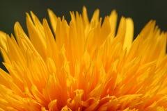 Fuoco del fiore Fotografia Stock Libera da Diritti