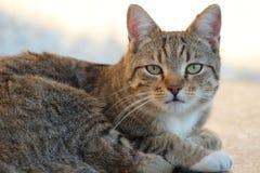Fuoco del gatto Fotografia Stock Libera da Diritti