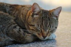 Fuoco del gatto Fotografie Stock