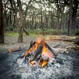 Fuoco di accampamento in foresta Immagini Stock Libere da Diritti