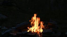 Fuoco di accampamento in foresta alla notte stock footage