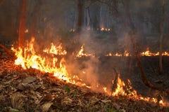 Fuoco di Bush in foresta tropicale Fotografia Stock