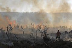 Fuoco e foreste Fotografie Stock Libere da Diritti