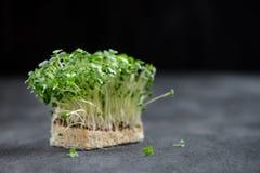 Fuoco fresco di Cress Salad Macro Shot Selective, Immagine Stock Libera da Diritti