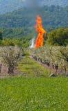 Fuoco in frutteto Fotografia Stock Libera da Diritti