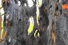 Fuoco in modelli misteriosi di legno su una betulla Fotografia Stock Libera da Diritti
