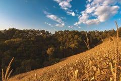 fuoco molle del paesaggio dell'azienda agricola del riso sulla montagna Immagine Stock