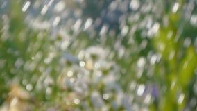 Fuoco molle delle piante di giardino versate con l'inondazione dell'acqua di estate nel slo-Mo archivi video