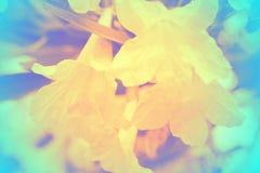 Fuoco molle di bei fiori con i filtri colorati Immagini Stock Libere da Diritti