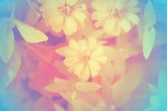 Fuoco molle di bei fiori con i filtri colorati Fotografie Stock