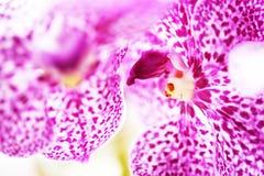 Fuoco molle e dolce dell'orchidea Fotografia Stock