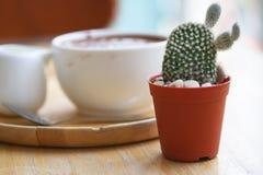 Fuoco molle per un cactus in caffetteria Fotografia Stock