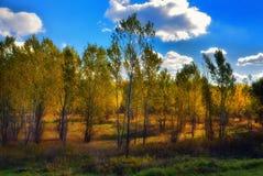 Fuoco nella foresta Fotografia Stock