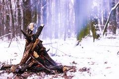 Fuoco nella foresta di inverno Fotografie Stock