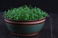 Fuoco selettivo del crescione colpo fresco dell'insalata del macro immagini stock