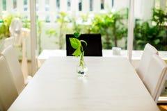 Fuoco selettivo dell'albero del pothos dorato nel vaso di vetro fotografia stock