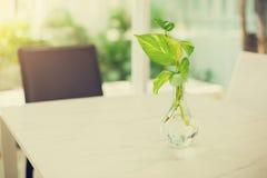 Fuoco selettivo dell'albero del pothos dorato nel vaso di vetro immagini stock libere da diritti