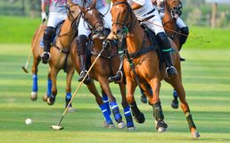 Fuoco selettivo i giocatori di polo del cavallo Fotografie Stock