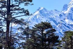 Fuoco selettivo: La valle di Yumthang o la valle del santuario dei fiori, è una bellezza della natura sulle specie dei prati del  fotografia stock