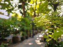 Fuoco selettivo sopra l'albero con bella luce solare Immagini Stock