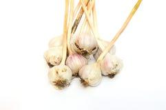 Fuoco selettivo sul nuovo raccolto di aglio organico (allium sativum) Fotografia Stock