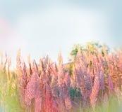 Fuoco selettivo sul seme di erba Immagini Stock Libere da Diritti