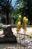 Fuoco selettivo sulle piante di giallo nella priorità alta Immagine Stock Libera da Diritti