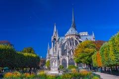 Fuoco sui fiori della priorità alta Vista bello Notre Dame Cathedral immagini stock