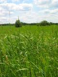 Fuoco sull'erba Immagini Stock Libere da Diritti