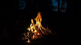 Fuoco in un camino Bruci il fuoco con legno e le gambe all'aperto Fuoco di accampamento nella foresta di notte mentre accampandos archivi video