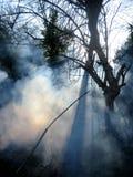 Fuoco in una foresta, in un fumo ed in una luce solare immagine stock
