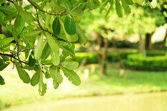 Fuoco verde del giardino su priorità alta Fotografia Stock