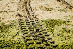 Fuori dalla pista del pneumatico dell'automobile della strada sulla spiaggia sabbiosa Fotografia Stock Libera da Diritti