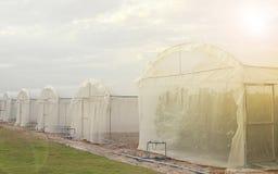 Fuori delle serre per la coltura della pianta organica Fotografia Stock Libera da Diritti