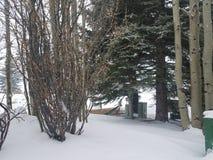 Fuori per una camminata nella neve immagine stock